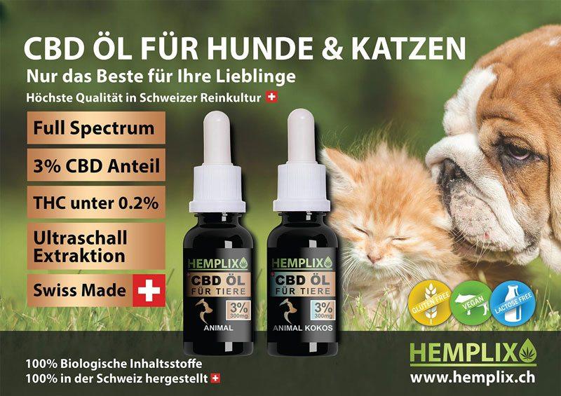 CBD Öl für Hunde und Katzen